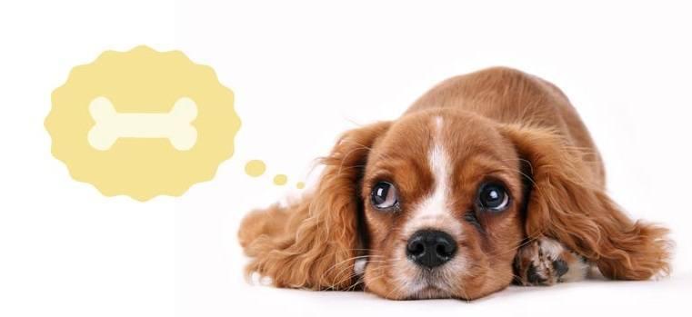Best Wheat Free Dog Treats