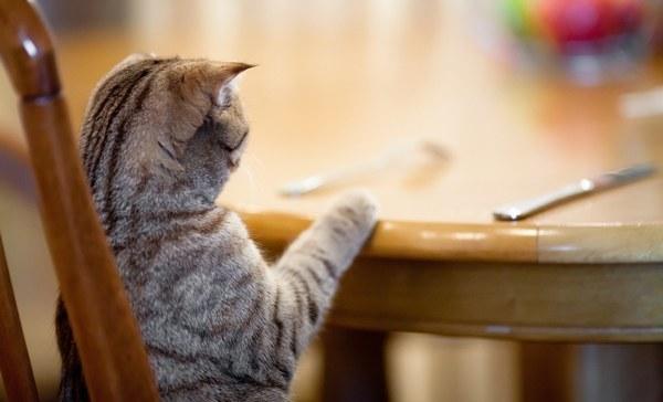 Cat at Table - Cat Wont Eat
