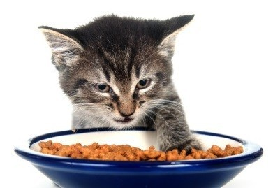 Cat with Food Bowl - Reasons a Cat Wont Eat