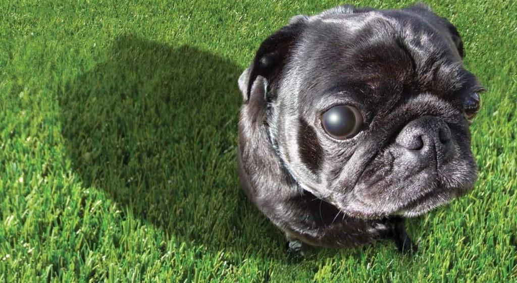 Dog Urine Killing Grass
