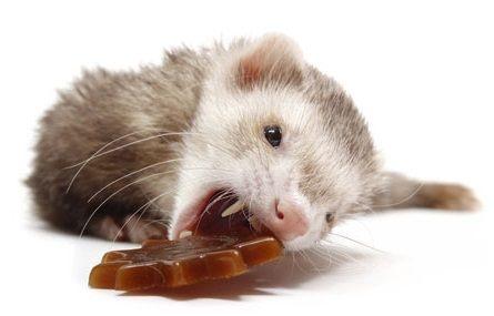Ferret Treats - Best Ferret Food