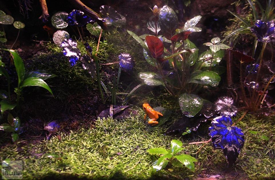 Frog Aquarium with Mister