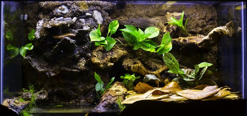Frog Care - Frog Tank Half Water Half Land