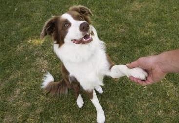 Grass Guard Products - Dog Urine Killing Grass