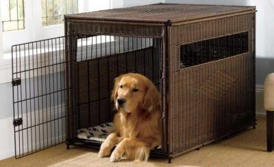 Best Indoor and Outdoor Dog Crates