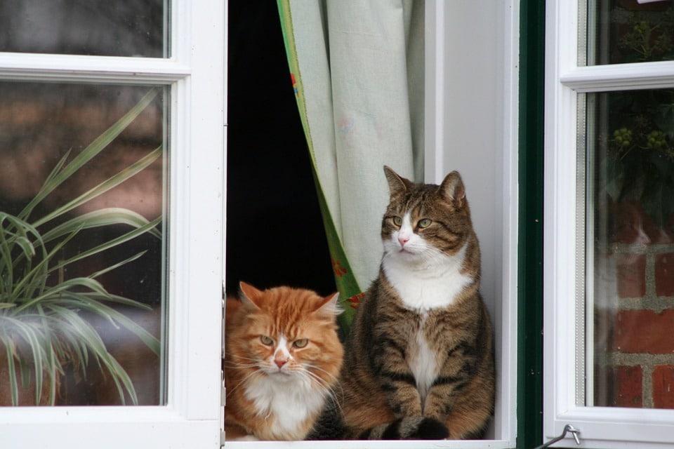 benefits of an indoor cat