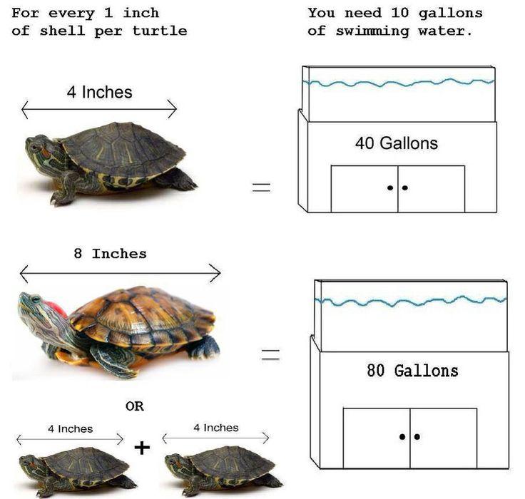 what kind of turtle should I get