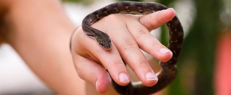 handling pet snakes
