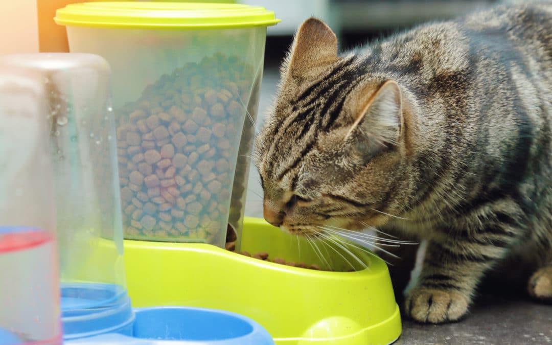 best automatic cat food dispenser
