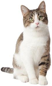best cat litter for smell