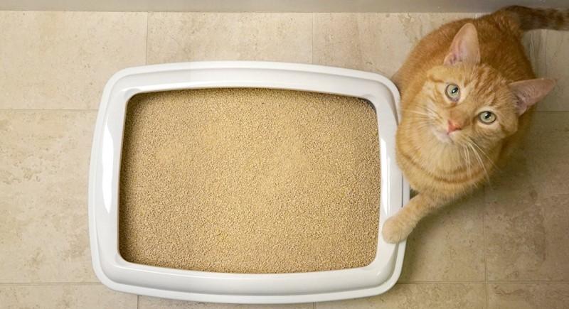 best multiple cat cat litter