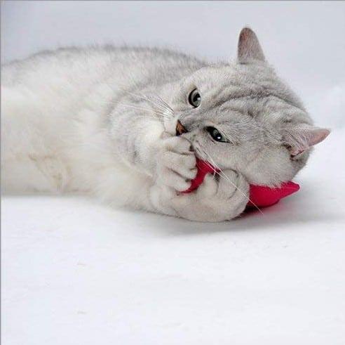 Catnip Plush Toys