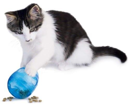 best cat toys for kittens