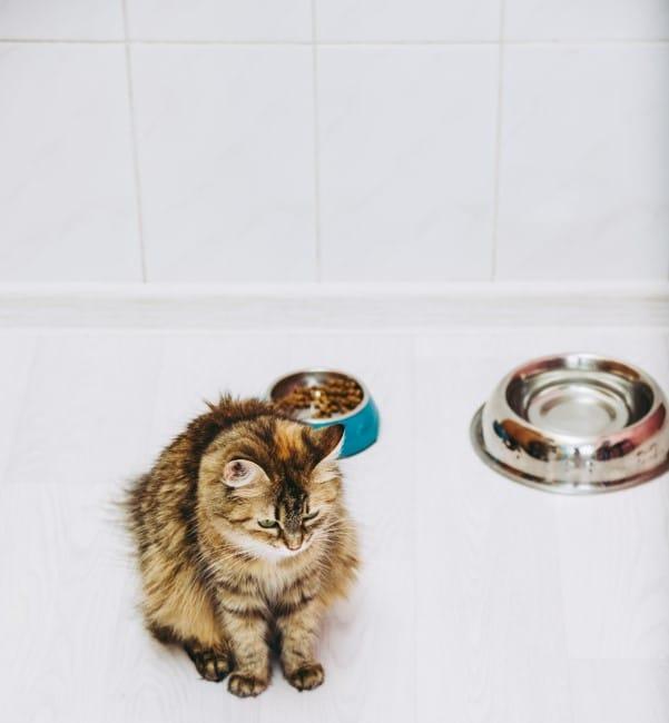 cat won't eat