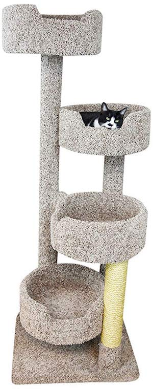 Best Cat Condo for Large Cats