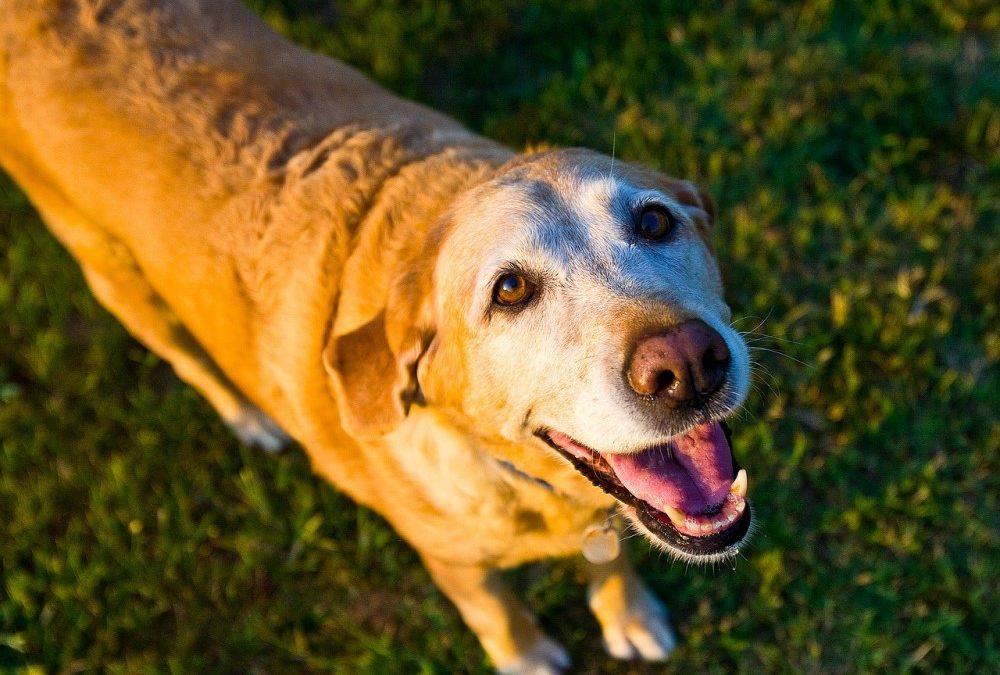 The Best Senior Dog Food in 2021