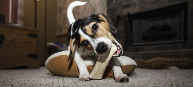 best dental bone for dogs-min