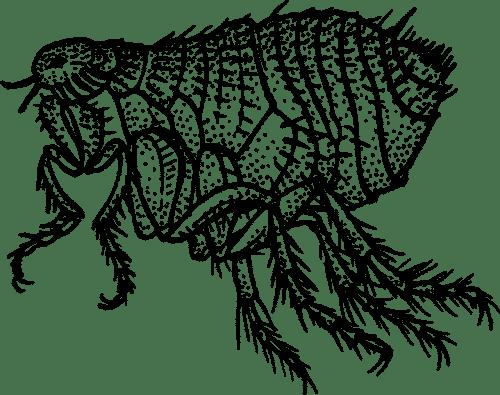 best dog flea treatment reviews-min