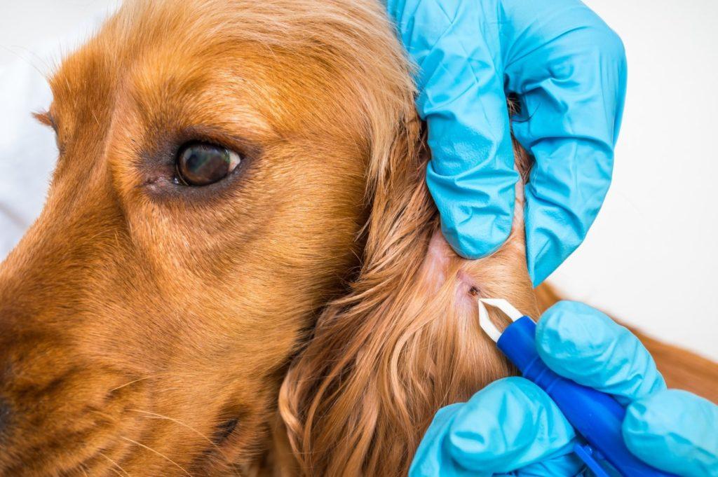 best flea treatments for dogs-min