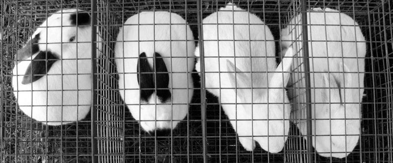 best rabbit cage-min