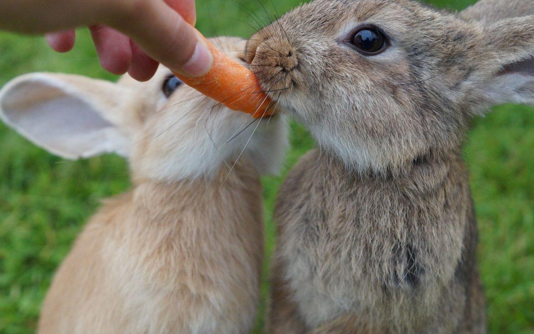 The Best Rabbit Food in 2021: Wanna Munch?