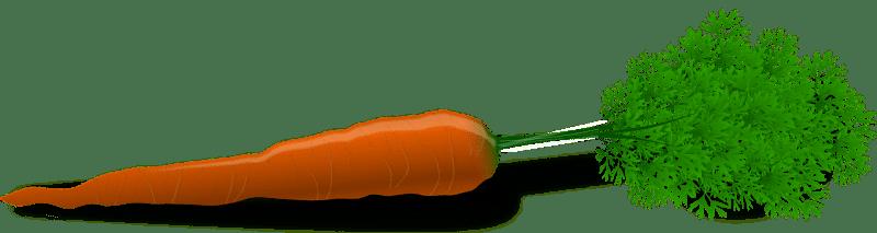 best veggies to feed rabbits-minbest veggies to feed rabbits-min