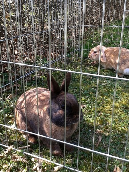 what kind of bedding is best for rabbits-min