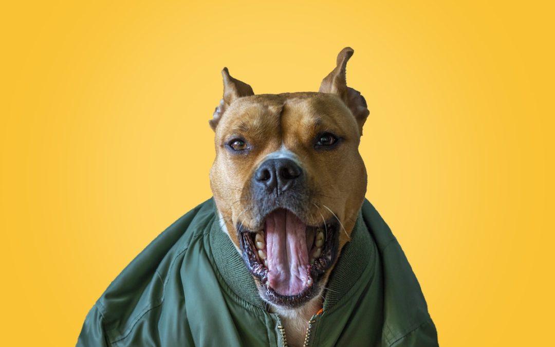 7 Best Dog Food for Pitbulls 2021