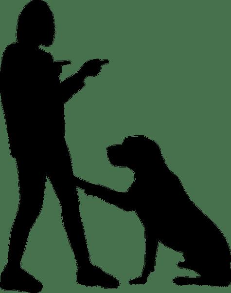 how to potty train a dog-min
