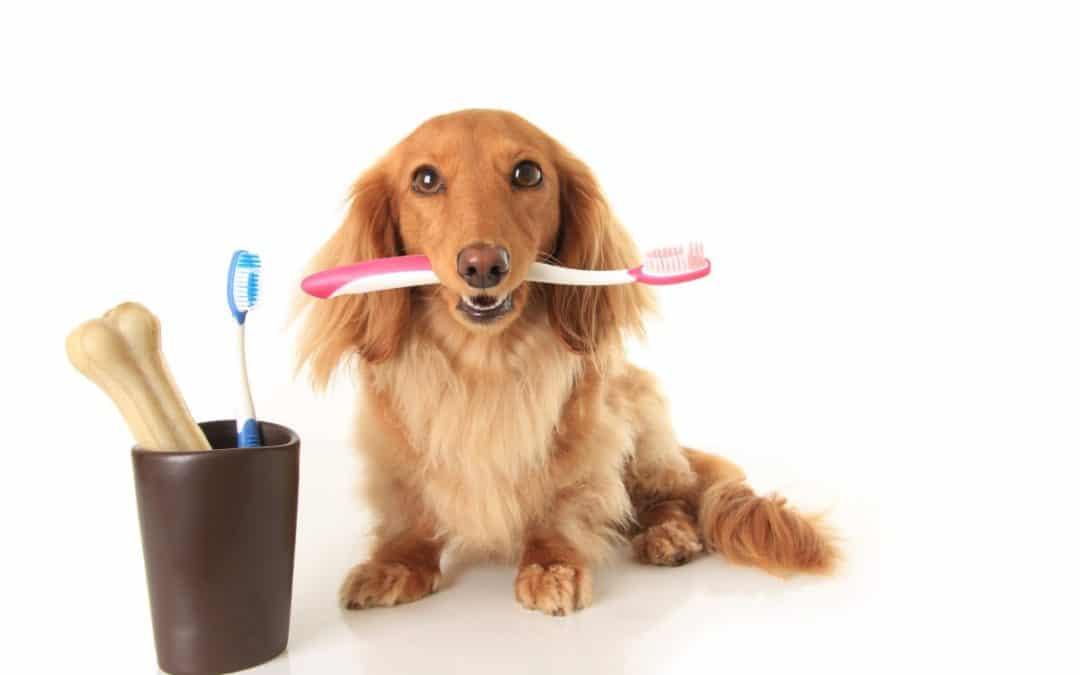 10 Best Dental Treats for Dogs in 2021