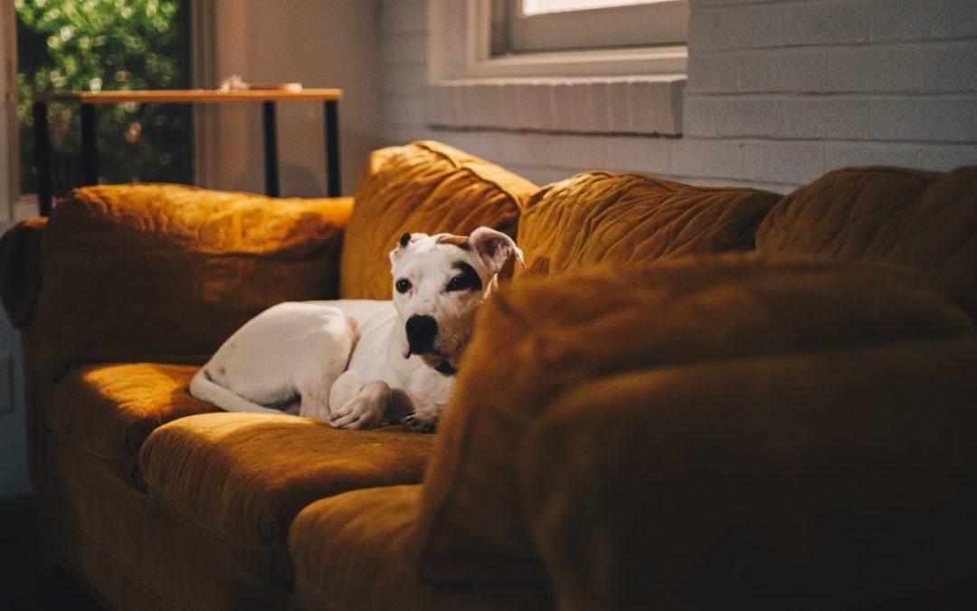 The 10 Best Pet Cameras in 2021