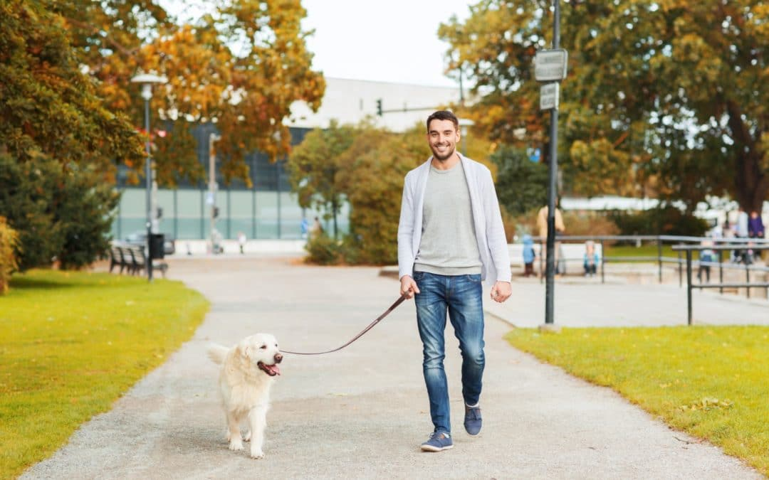 The 10 Best Dog Leashes in 2021